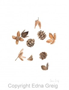 Beech Nuts and Hemlock Cones(Fagus grandifolia and Tsuga canadensis)Watercolor on paper 9 x 11 inches