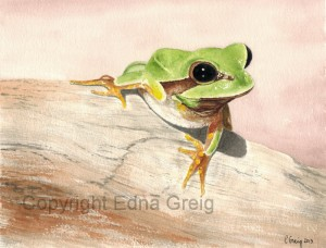 Pine Barrens Treefrog(Hyla andersonii) Watercolor on paper 8.5 x 10.5 inches